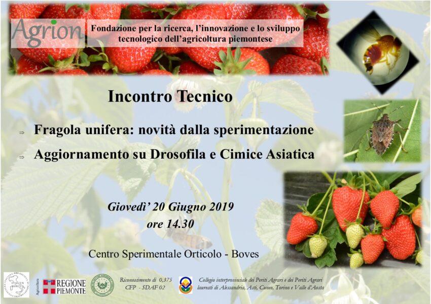 20/06/2019 – Incontro Tecnico Fragola (Boves CN, ore 14.30)