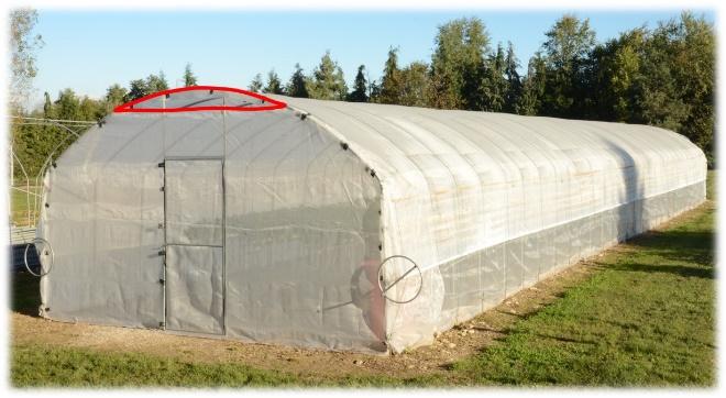 Tunnel di fregola rifiorente protetto con rete antinsetto perimetrale (maglia di 1.36 mm2)