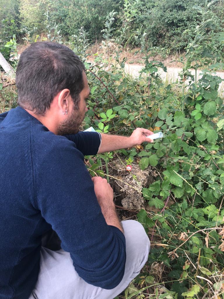 Iniziati in Piemonte i primi rilasci del parassitoide Ganaspis brasiliensis, antagonista naturale del moscerino dei piccoli frutti (Drosophila suzukii)